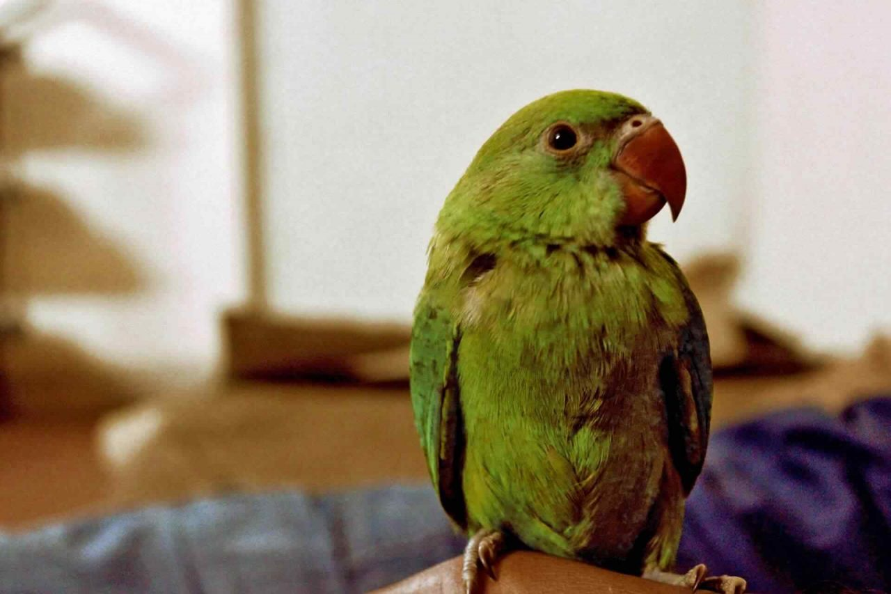 PETS bird2