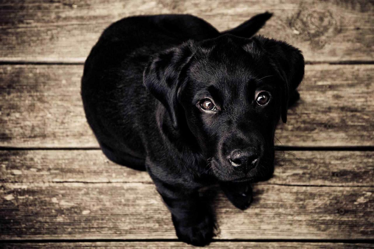 PETS dog4